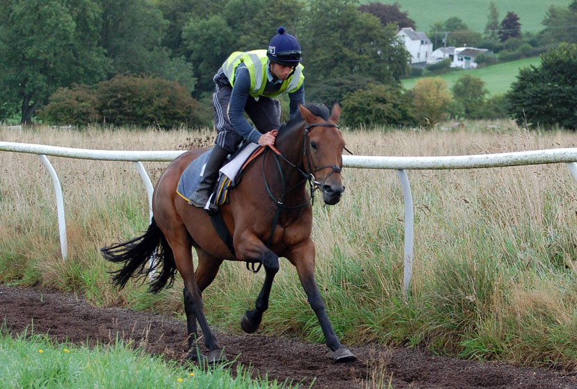 Katie on the gallops