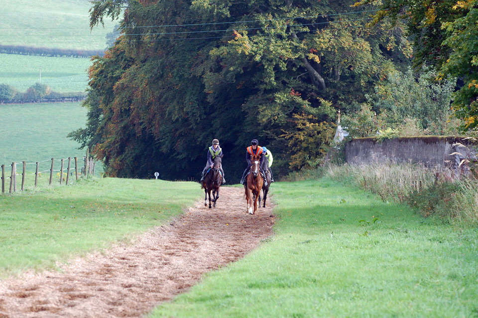 View from gallops